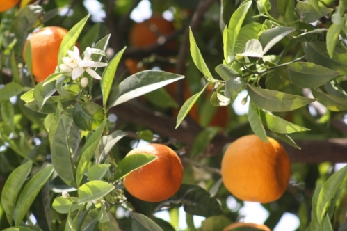 fleurfruit